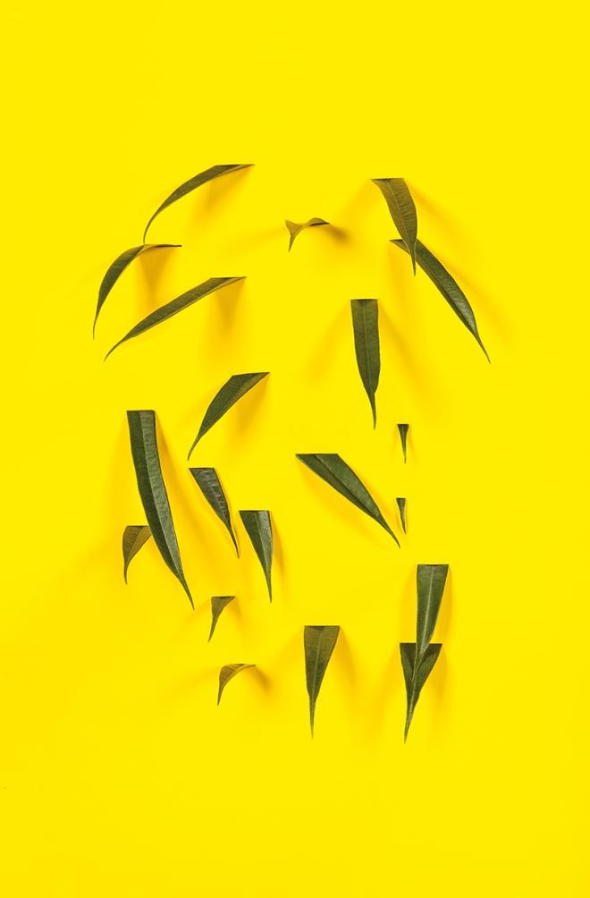 160607_Yellow